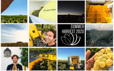 Newsletter Verano 2020