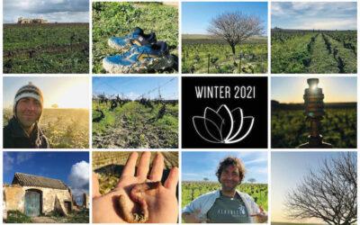 Newsletter Invierno 2021